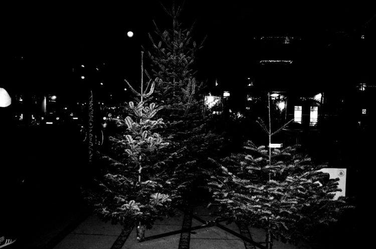 Xmas trees Copenhagen  - street - petersteinmetz   ello