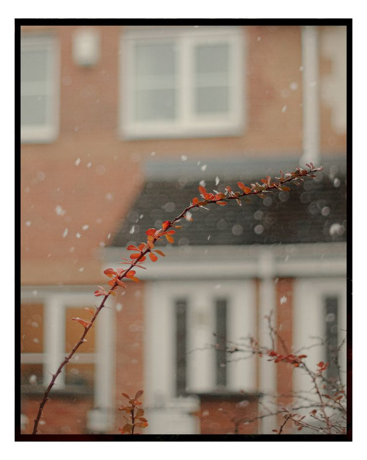 snowflakes alinatrifan.com - alinatrifan | ello
