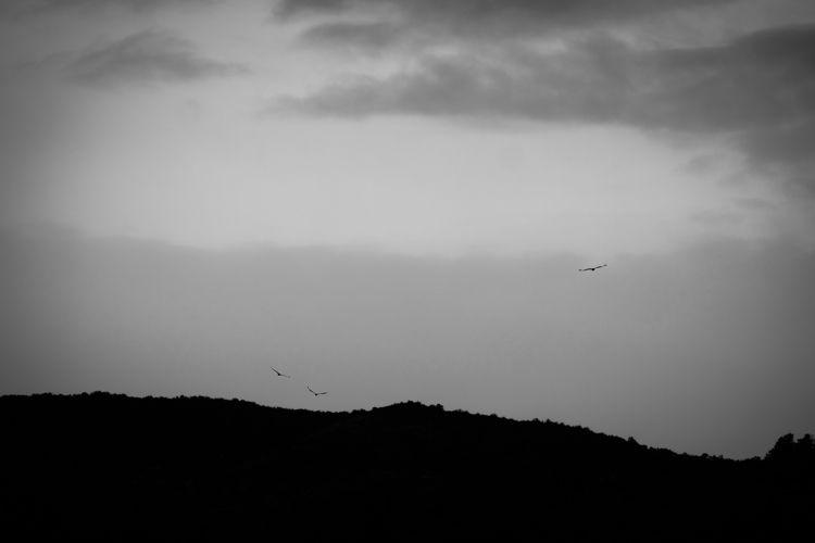 flying cloudy aftrenoon, decemb - yannkerveno | ello