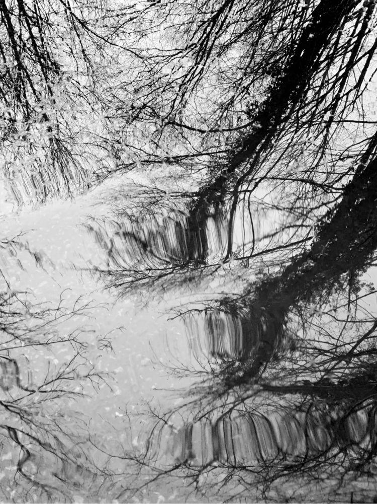 Rippling Trees - photography, blackandwhite - davidhawkinsweeks | ello
