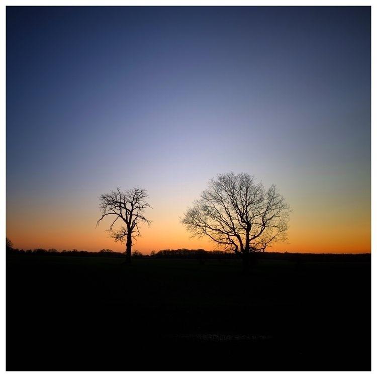Fading Light Trees - photography - davidhawkinsweeks | ello