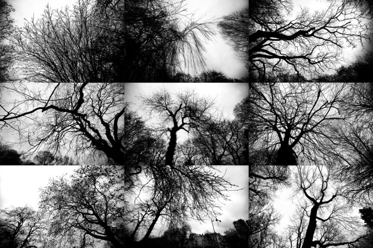 tree, trees, branches - lorseau | ello