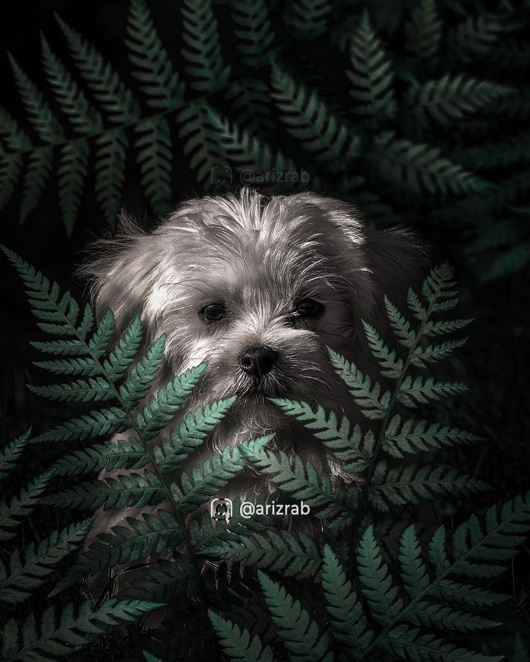 Hiding dog forest. Metal Poster - arizrab | ello