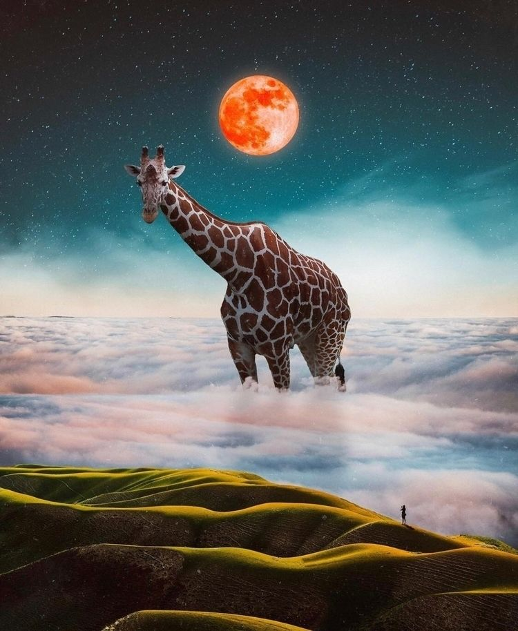 🦒 Giraffe!  - photoshop, art, design - nick_asphodel   ello