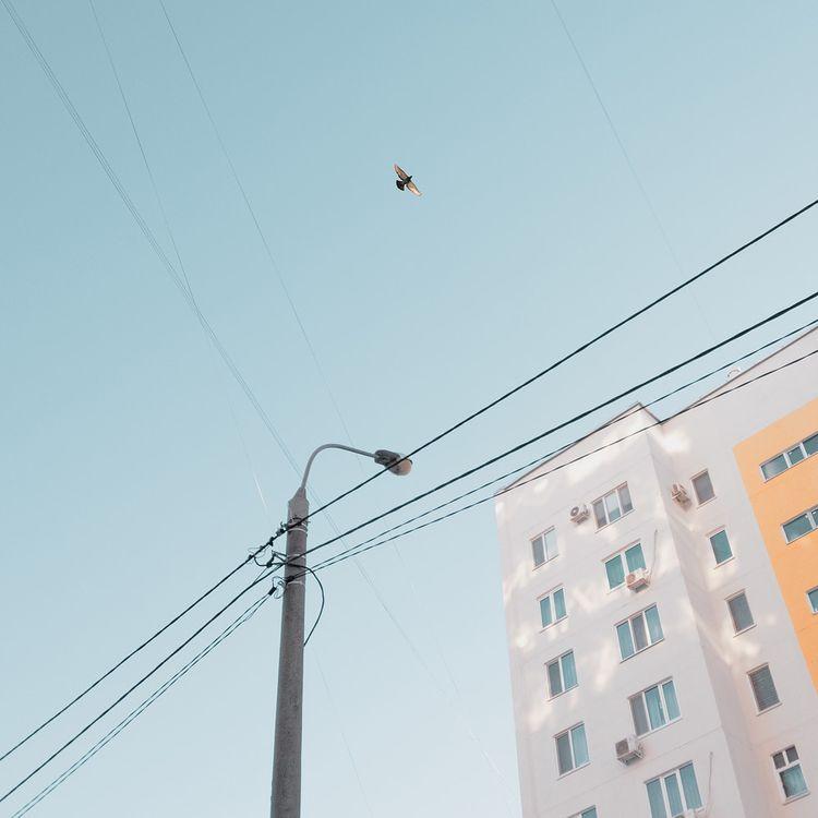 Dove peace | Instagram - bird, sky - andreigrigorev | ello