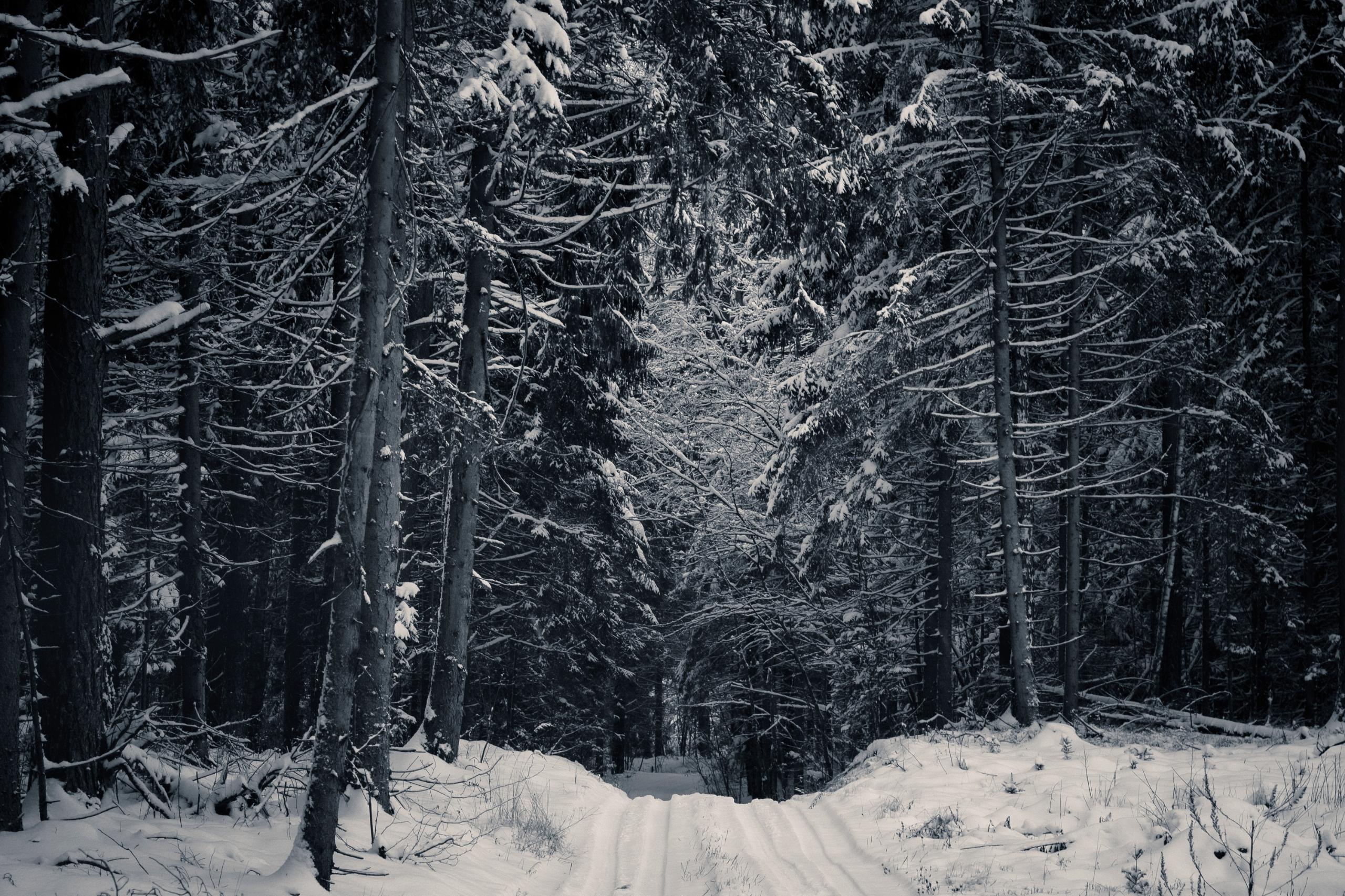 lithuania, lietuva, природа, landscape - beheroght | ello