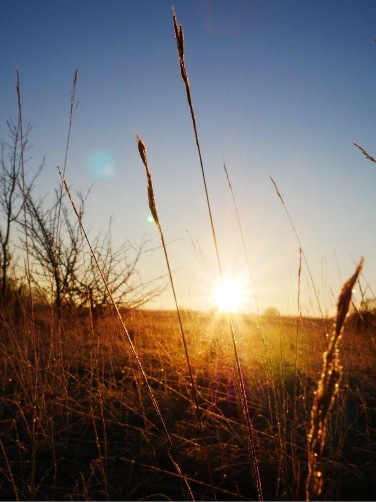 Sunshine dry grass, 11.01.2021 - ivanlich | ello