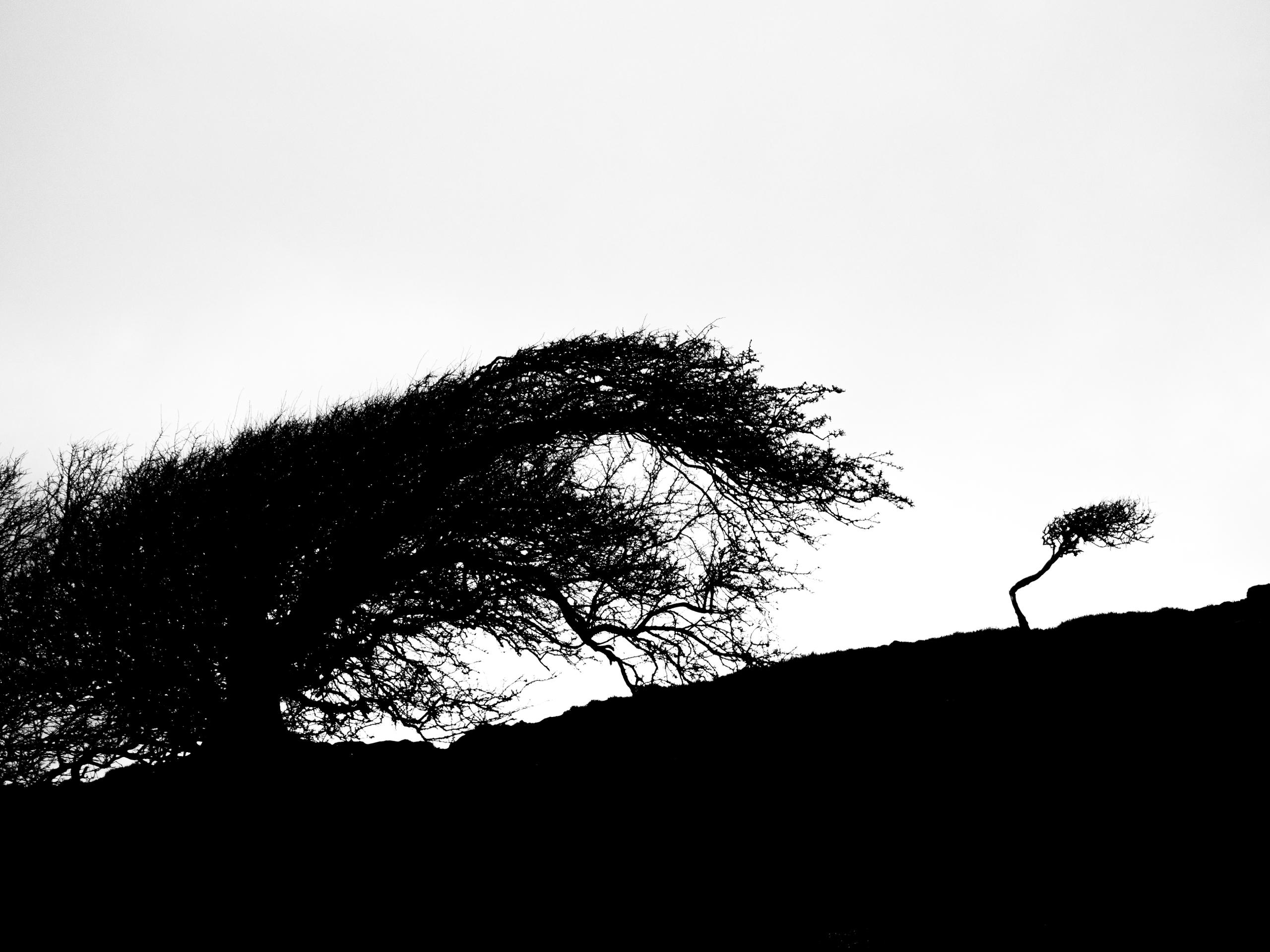 Wind-blown - stevemallett | ello