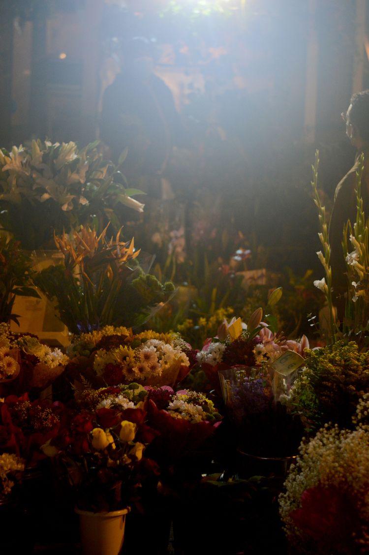 Flores - ello, photography - albertphotos11 | ello