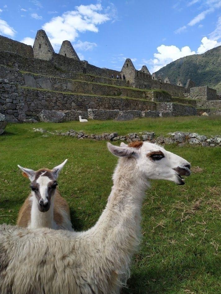 Machu Picchu - Peru - machupicchu - raphadiaz | ello
