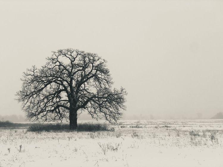 Winter tundra - winter, blackandwhitephotography - davidjdeal | ello