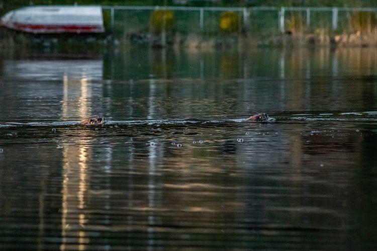 River Otter 2020 02 19 09 Stans - davidseibold | ello