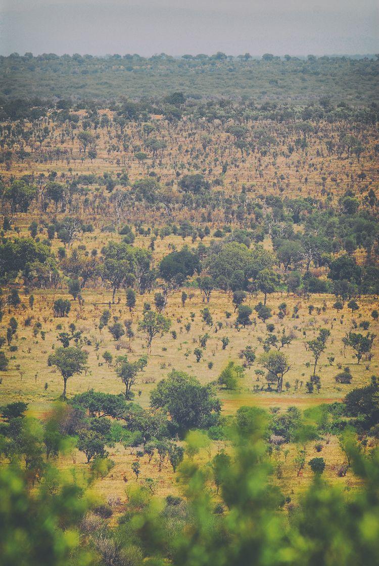 endlessness savannah Africa - landscape - christofkessemeier | ello
