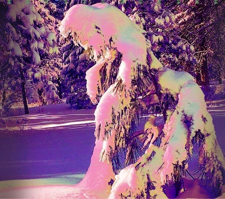 Pine needles ice metaphor life  - hjcross_poetry | ello