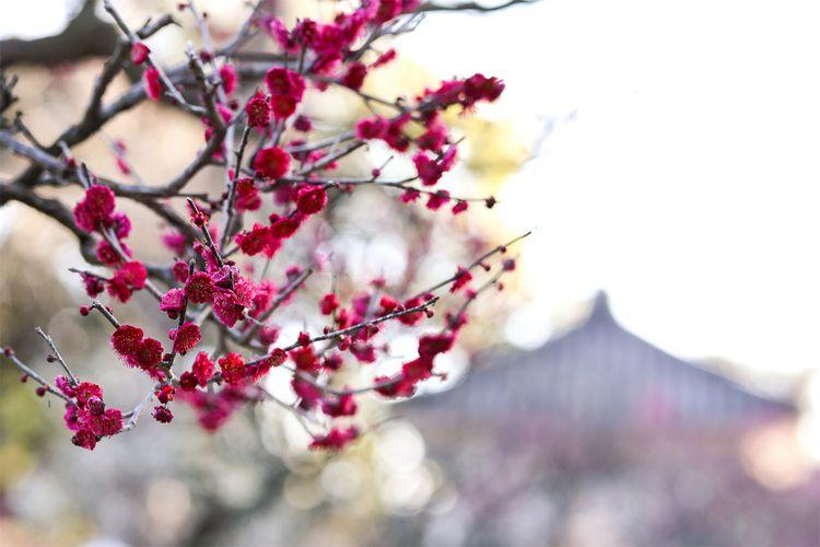 springtime dyeingDouMyouji OSAK - miki_abe | ello