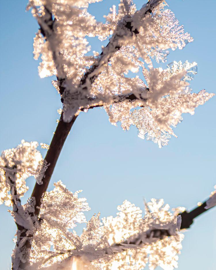 frozen branch covered ice cryst - tomsimonsen | ello
