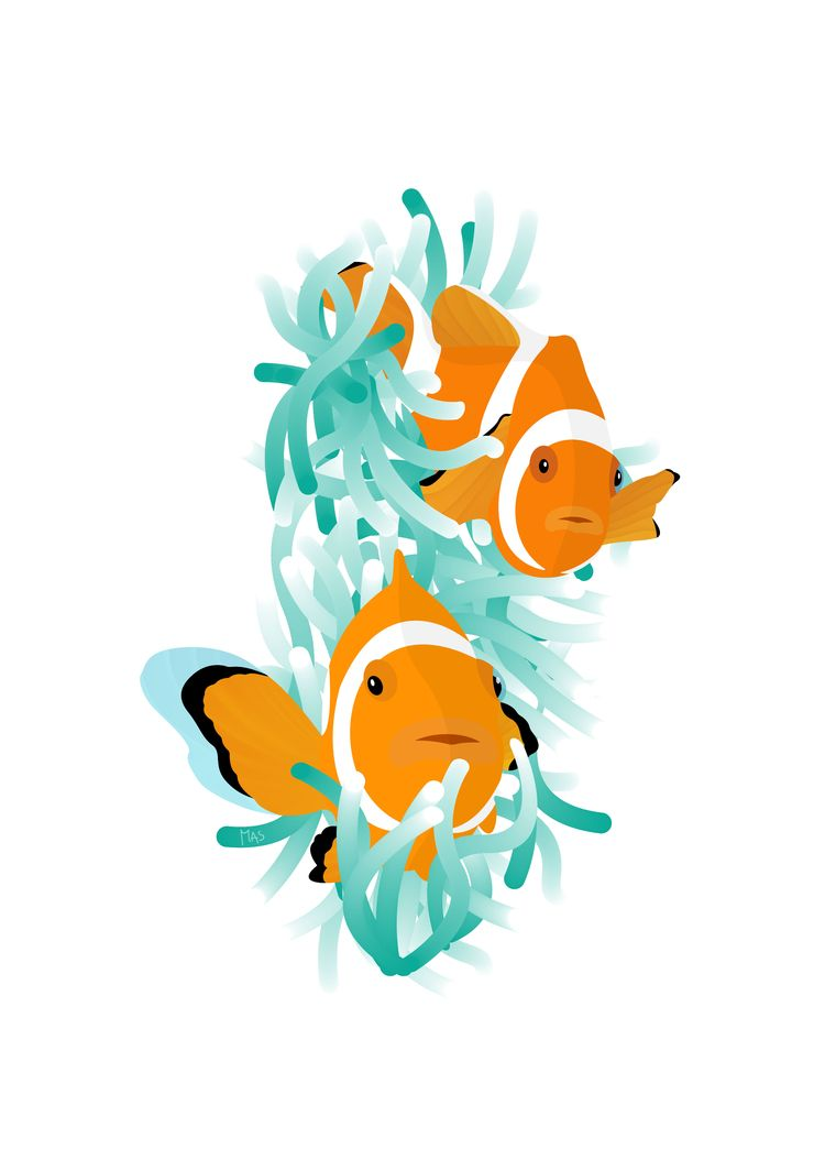 clownfish natural habitat - nature - masgraphicdesign | ello