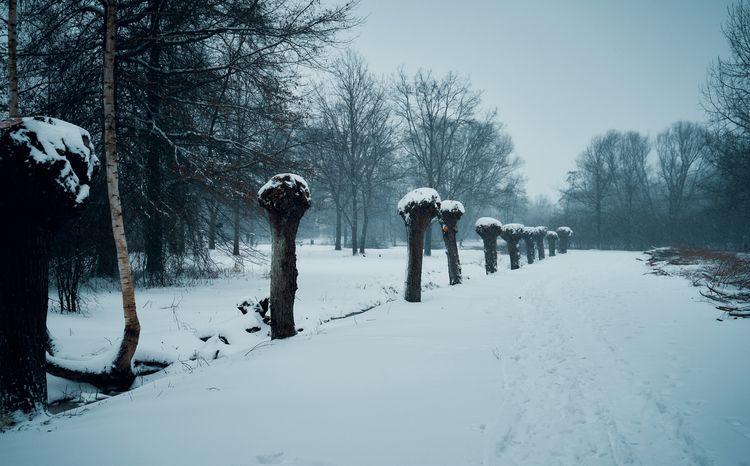 Snow covered trees - nature, naturephotography - klausheeskens   ello