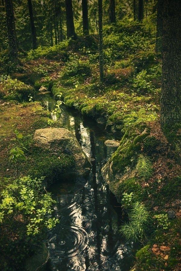 Stream forest Finland - jolandasdreamworld   ello