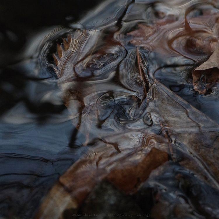 Water Channel, 2102#1157 - nature, - ntakano | ello