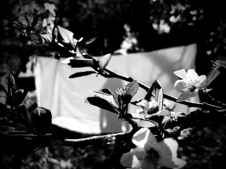 branco - Preto, dark - teresa_valente | ello