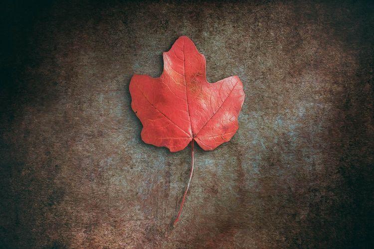 Red Leaf alphabet, whispering l - scottnorrisphotography   ello