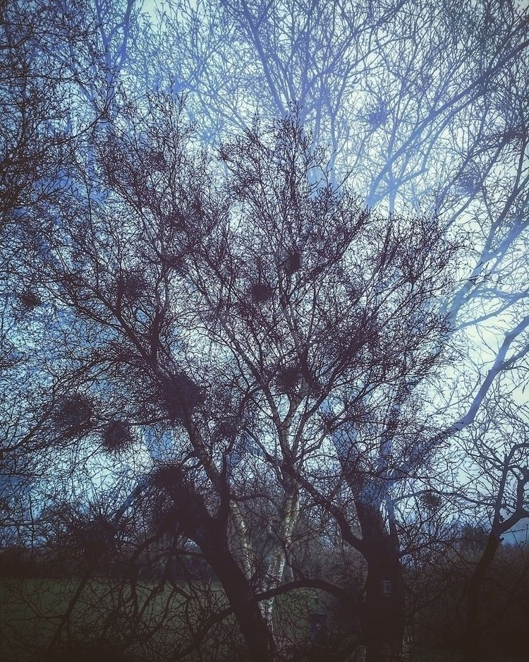 photography, trees, nature, doubleexposure - burningfp | ello
