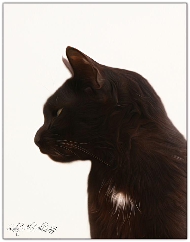 Black Cat - sadiqalqatari | ello