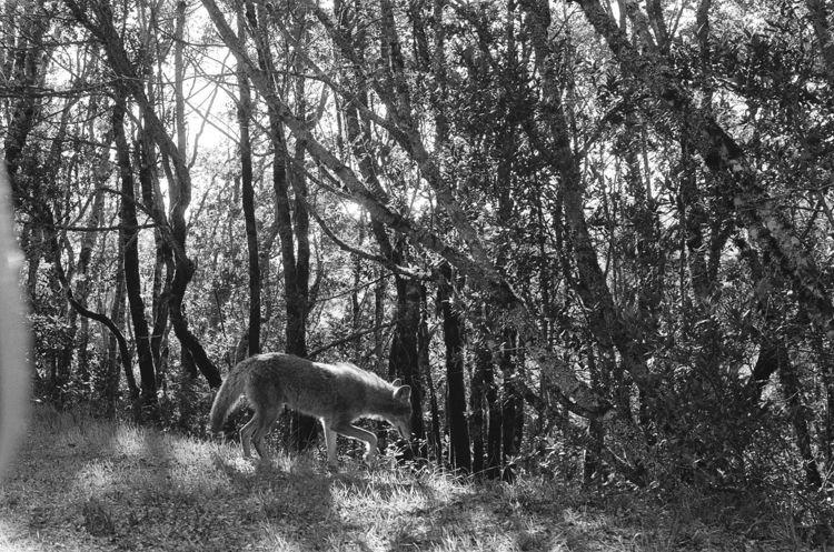 35mm, elloanalog, ellofilm#coyote - teetonka | ello