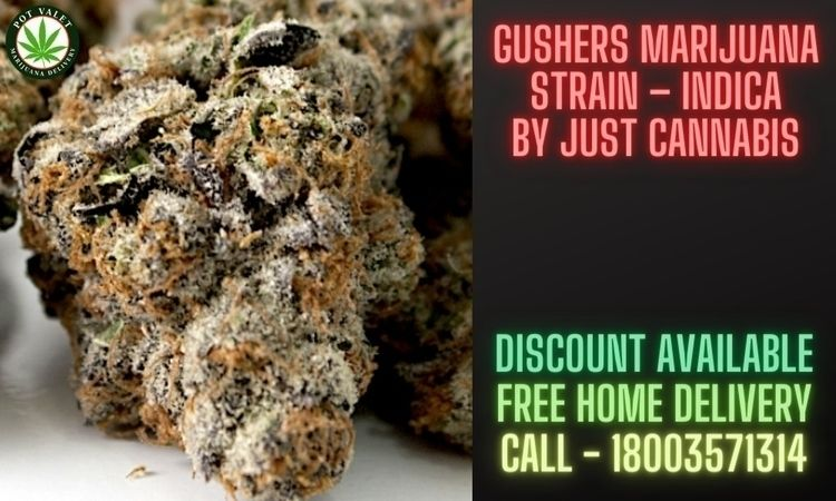Gushers Marijuana Strain – Indi - dorothywatson | ello