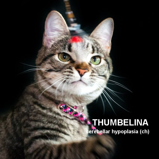 THUMBELINA THURSDAY Thumbelina  - snapcats | ello