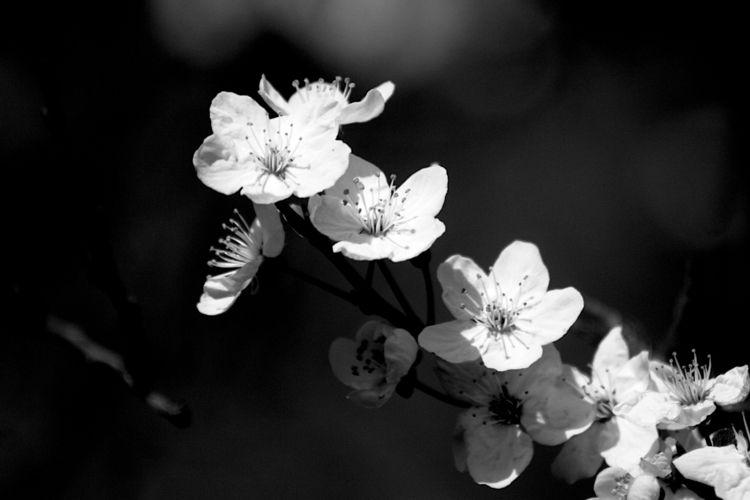 Botanical Monochrome 9797 - flowerphotography - dorian-stretton   ello
