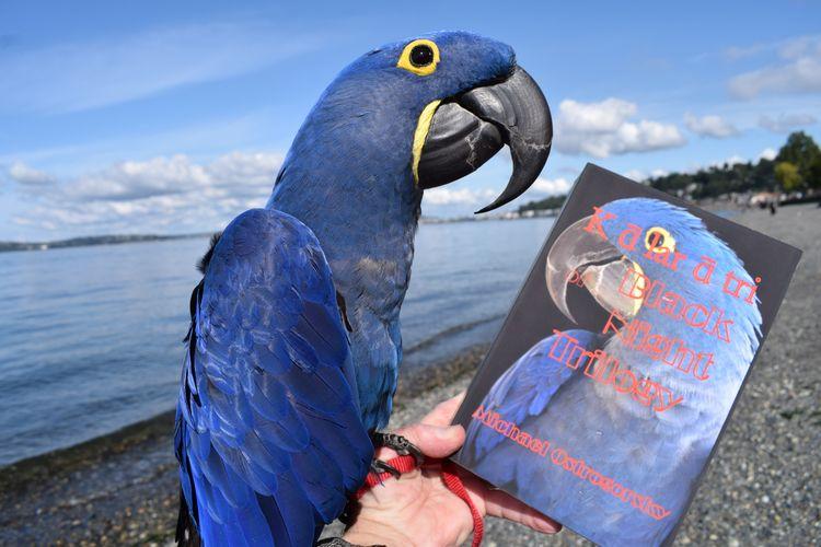 Hyacinth Macaw resident Princes - michaelostrogorsky   ello