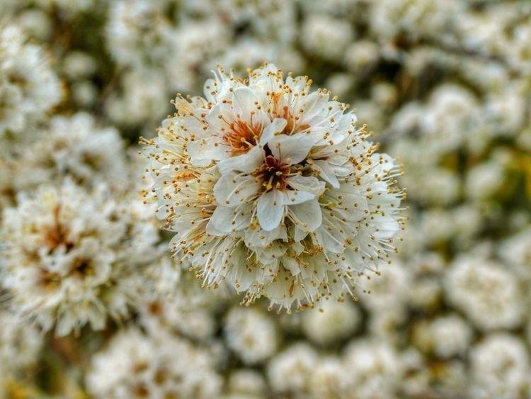 Flowers marsh (Panasonic LUMIX  - paulbines | ello