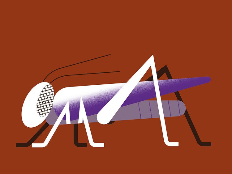 Locusta - illustration, design, insect - alconic | ello