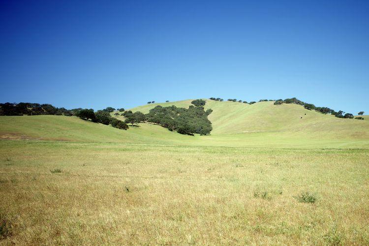 San Lucas, CA / 2, 2021 - biosfear   ello