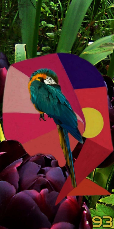 SLEEPING BIRDS SLEEP ZOMBIE BIR - novaexpress93 | ello