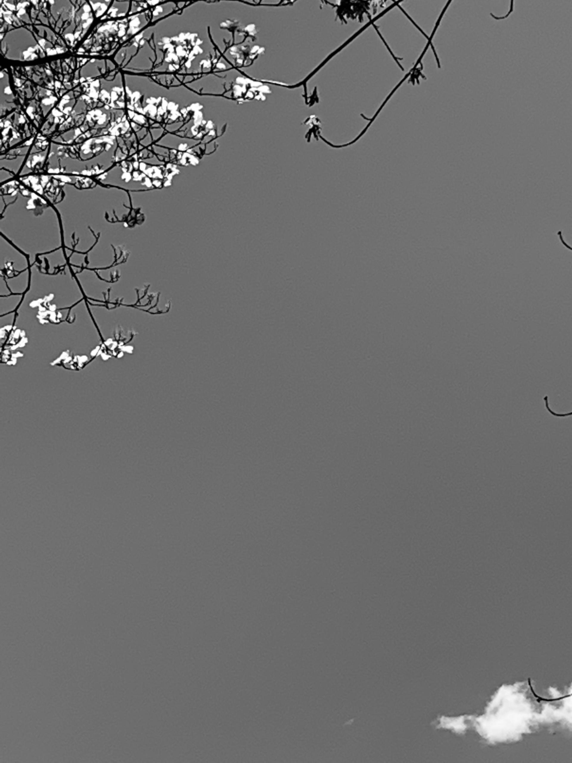 zebbro Post 13 May 2021 15:37:34 UTC   ello