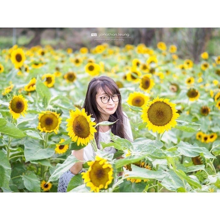 |花花草草:sunflower:| · Olympus 45m - jonathan-leung | ello