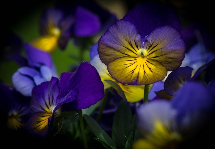 flowers,, colorphotography,, nature, - wildwildwestlyn | ello