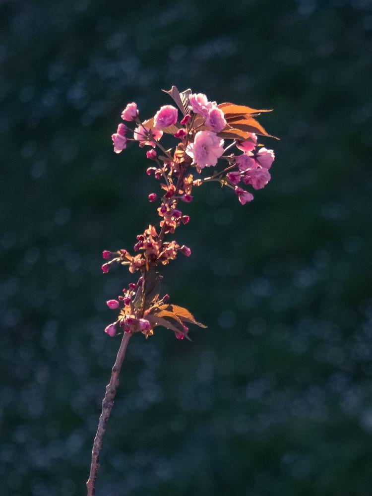 photography, nature, flowers - etng   ello