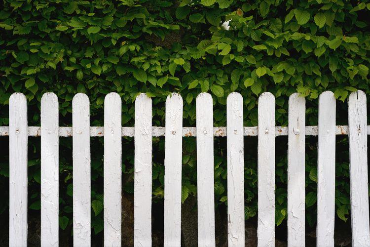 fence - photography, garden, spring - marcushammerschmitt | ello