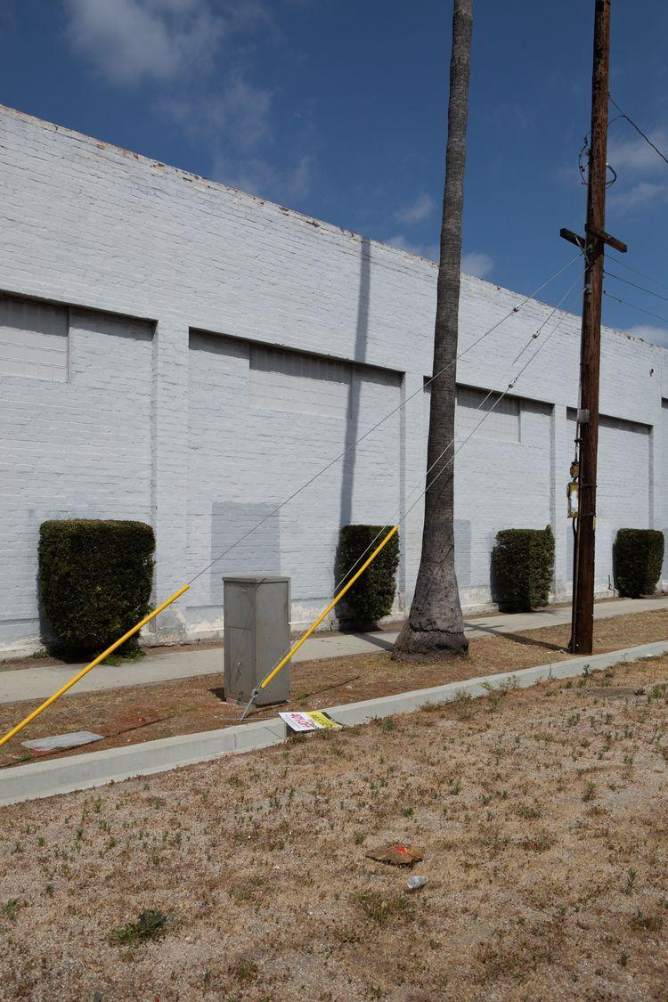 Topiary, Pep Boys, La Palma Dr - odouglas   ello