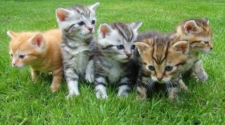 15 Interesting Fun Facts Cats c - vibhanshu_goyal | ello