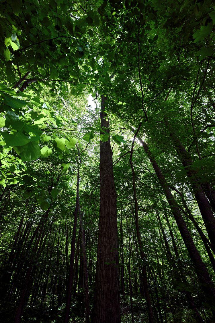 Verdant - Nature, green, verdant - junwin | ello