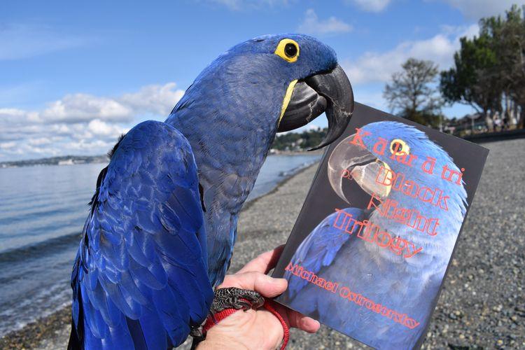 Hyacinth Macaw resident Princes - michaelostrogorsky | ello