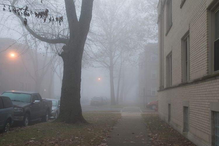 Early Morning Fog - photostatguy | ello
