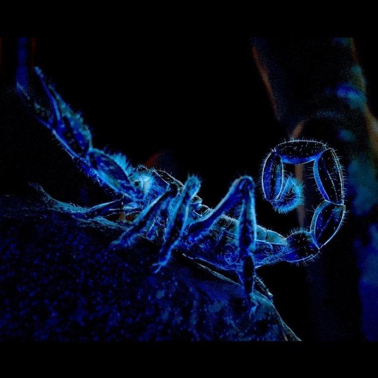 renders/views scorpion model. C - erickeller   ello