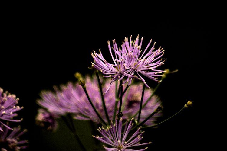 Colour Botanical 306 - flowerphotography - dorian-stretton   ello