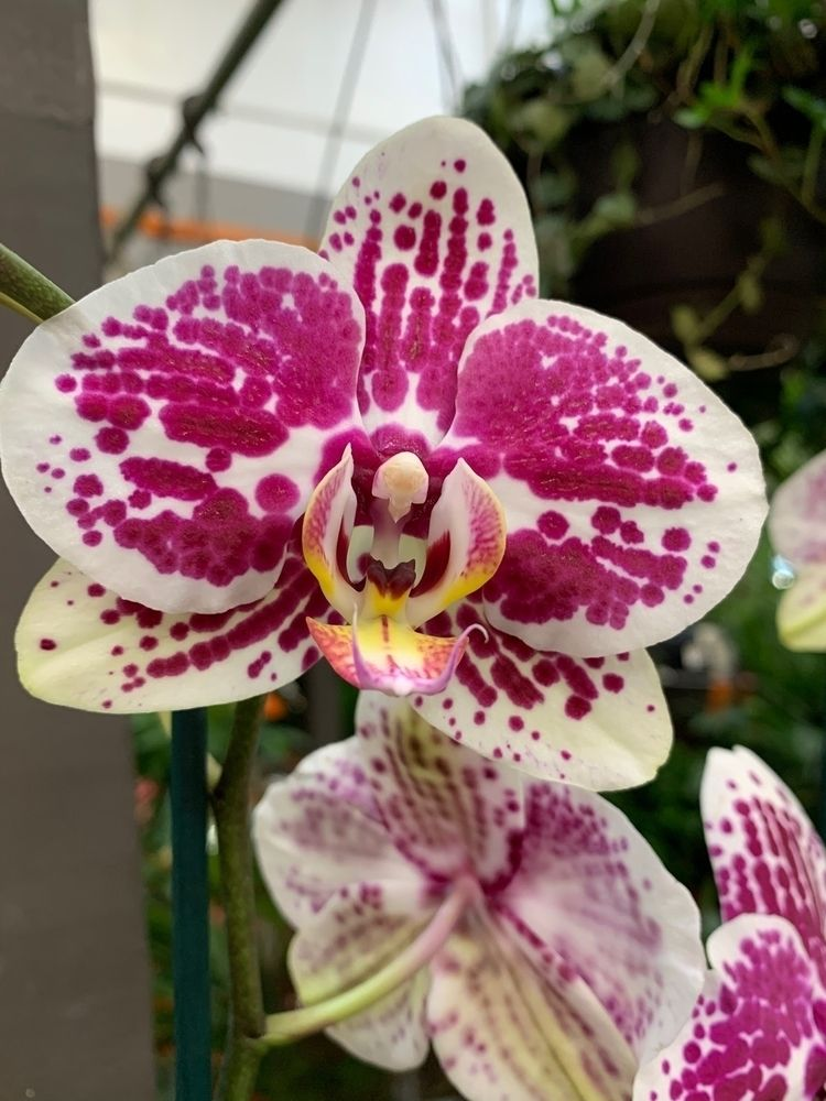 floral, botanical, flower, orchid - depressobean | ello
